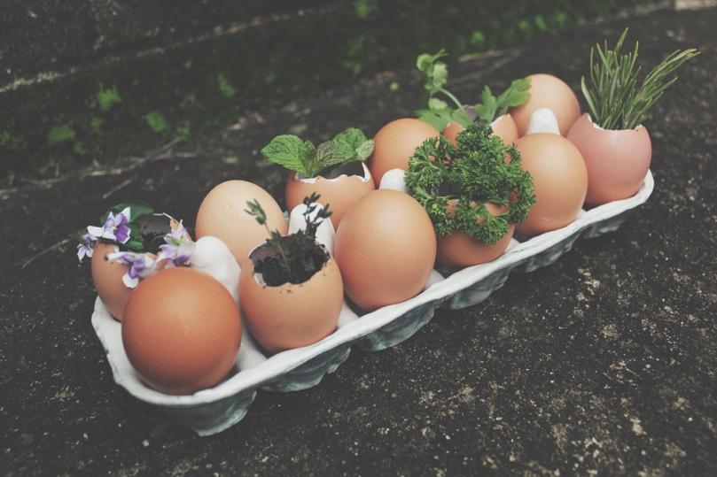 Eggciting Herb Garden