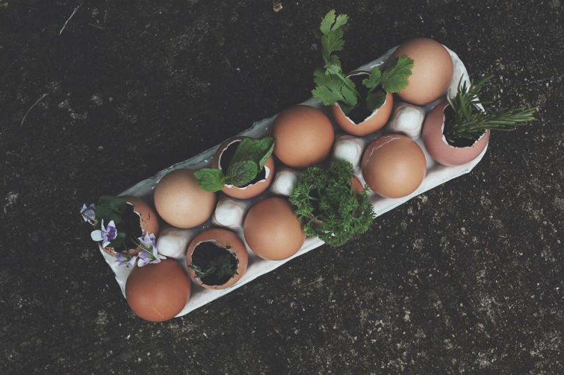 Eggciting Herb Garden
