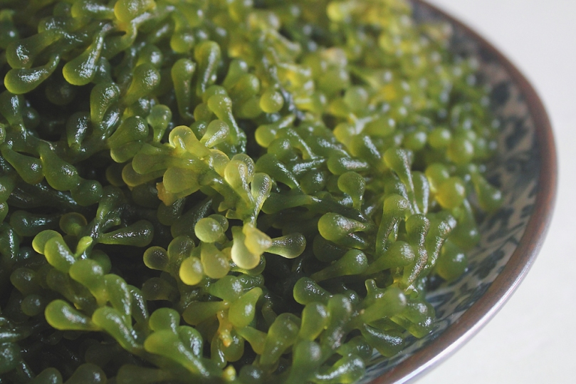 Green Caviar, Sea Grapes, Seaweed, or Lato